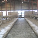 Cattle_Sheds